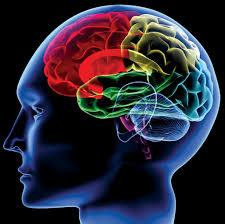 脳 アロマ