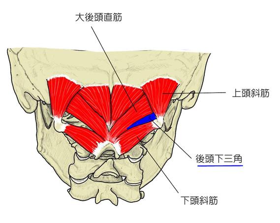 小田原 鍼 灸 マッサージ 頭痛